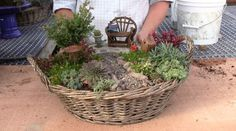 Planting a Miniature Garden Container THIS IS A HOW TO VIDEO..... CLICK ON TO WATCh
