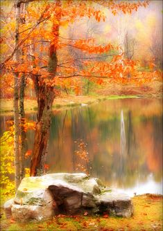 Croydon, Pennsylvania, USA - Fall colors are so beautiful! Fall Pictures, Pretty Pictures, Amazing Pictures, Travel Pictures, Autumn Scenery, Autumn Lake, Croydon, All Nature, Autumn Nature