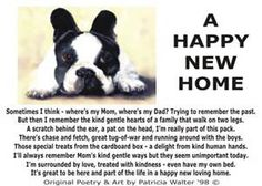 Happy New Home Poetry and Story by Patricia Walter Animal Lover Quotes, Puppy Quotes, Lovers Quotes, Dog Phrases, Happy New Home, Man And Dog, Try To Remember, Dogs Of The World, New Puppy