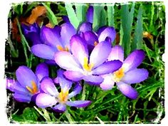 """""""Signs of Spring"""" Digital $35.00 Per Print 8 1/2 x 11 at this time"""
