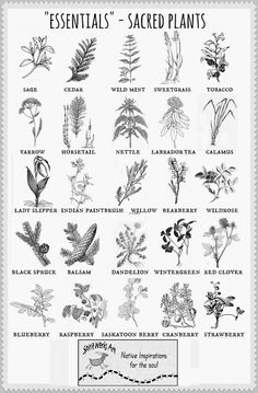 Artistic Environments: Spirit Works ARt **Traditional Plants Poster * Native Healing Plants for Medicine and Well Being