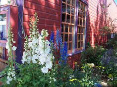 Wild flowers in Crested Butte Colorado .