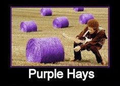 """Jimi Hendrix - checkin' out purple """"hays"""" lol Jimi Hendrix Purple Haze, All Things Purple, Purple Stuff, My Brain, My Favorite Color, Laugh Out Loud, Make Me Smile, Cool Photos, Funny Pictures"""