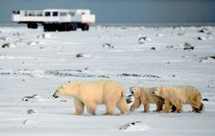 Churchill, Manitoba, Canada, a place where you are quite likely to see polar bears.