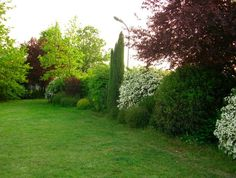 Image result for shrub borders