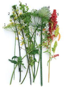 Flowering vegetables | Gardens Illustrated
