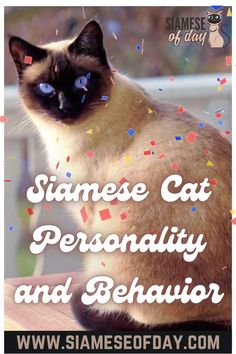 The Siamese is known to be one of the oldest royal breeds among cats. This breed is quite distinct from the rest not only due to its unique physical appearance but also due to its strong personality. They are surely not like the regular cat you must have seen. The Siamese is very chatty, highly friendly, and intelligent breed. #Siameseofday #siamese #cats #pets #pettips