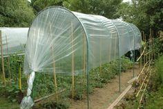 La tomate est sujette aux maladies : mildiou, alternariose, feuilles enroulées... Suivez nos conseils pour les prévenir, les soigner et éloigner les ravageurs.
