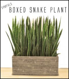Simsworkshop: Boxed Snake Plant by Sympxls • Sims 4 Downloads