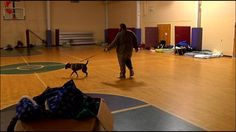 Warming shelters allow pets - WKRN, Nashville News