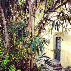 Corfu, Copyright © Ellie Tsatsou Corfu, Urban, Plants, Plant, Planets