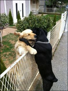 Doggie hugs
