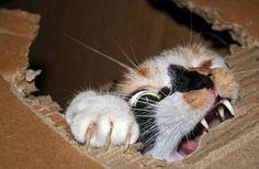 cat saturday 20 Cat Saturday (25 Photos)