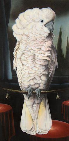 Jared Joslin-Cockatoo