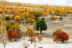 The colours of autumn in Gilgit-Pakistan