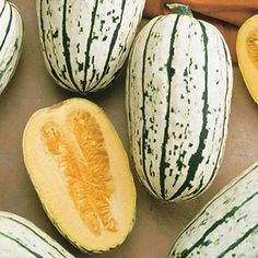 Winter Squash Delicata in The Big Seed Book from Park Seed on shop.CatalogSpree.com, my personal digital mall.