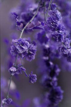 ~~Again Blues by RezzanAtakol~~