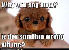 Why you say aww?  iz der somthin wrong wif me? - cute puppy