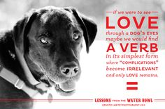 A little love note. Image and text ©Photo Lab Pet Photography. Do Love, I Love Dogs, Puppy Love, Dog Words, Text Photo, Animal Photography, Photography Ideas, Puppies And Kitties, Dog Eyes