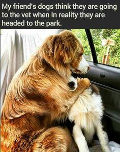 Good pals