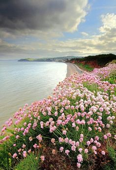 Devon, England by James Anderson. Some flowers on top of Langstone rock looking towards Dawlish.