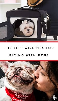 The Best Airlines fo The Best Airlines for Flying with a Dog travel Flying With Pets, Flying Dog, Dogs On Planes, Dog Travel, Airline Travel, Travel Tips, Travel Hacks, Cheap Pets, Travel