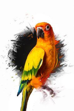 Maverick the parrot