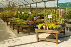 Photo about Plants displayed in a garden center. Image of center, plant, plants - 45314552 Lowe's Garden Center, Garden Center Displays, Garden Shop, Garden Club, Forest Garden, Plant Nursery, Flower Boxes, Flowers, Layout