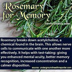 Rosemary for Memory