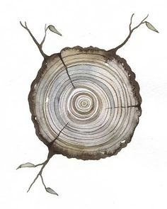 Watercolor wood slice illustration