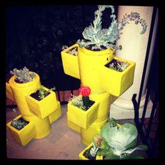 My new succulent garden! @westelm #succulent #succulentgarden #urbangarden