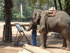Chang Mai, Thailand....Who knew Elephants could Paint?