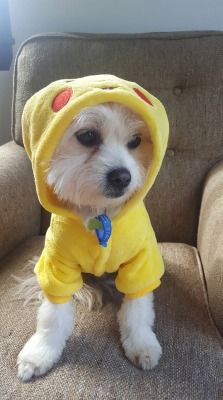 """Caitlin Barrie dressed her dog, Alf, in his Pikachu onesie """"to help him feel safe""""."""