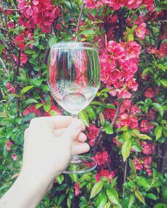 Vasárnapi relax 🍷😉Sunday funday 🙈·····#whitewine #irsaioliver #hilltop #fröccs #spritzer #drinkingsomewine #winetime #wineday #springgarden #blooms #lovelyday #familytime #home #wineglass #holdingaglass #inmyhand #vscohun_mbr #magyarig #lifestyleblog #magyarblog #ighungary #ti_hungary #mik #mutimitiszol