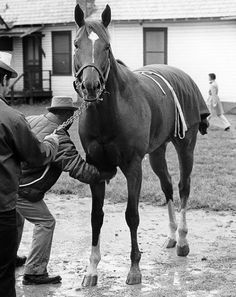 Look how alert and lovely Secretariat was.  Reports are said that he was a ham that just loved people and attention.  He warms my heart./always one of my favorite pics. Eddie's devotion, the style of the woman striding by in the background, above all the relaxed confidence of the lifted leg, the silly grin and kind acceptance  on the face of the greatest equine athlete in recorded history...