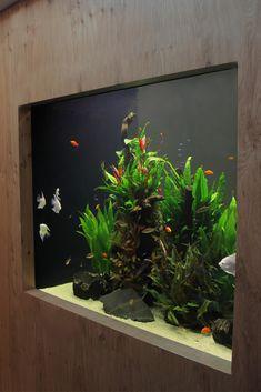 Joie de Vivre – Elegant planted aquarium / Aquarium, aquarium ideas, fish for aq… Aquarium Mural, Nature Aquarium, Aquarium Lighting, Aquarium Design, Reef Aquarium, Aquarium Fish Tank, Fish Tanks, Planted Aquarium, Aquarium Pump