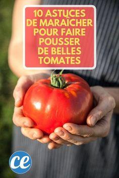 10 Astuces De Maraîcher Pour Faire Pousser De Belles TOMATES. Permaculture, Planters, Vegetables, Plantation, Vinaigrette, Bio, Gardening, Vegetable Garden, Veggie Gardens