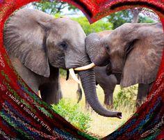 Love - L'amore è uguale per tutti!