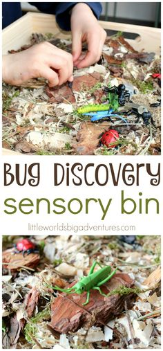 How to set up a bug discovery sensory bin. | Little Worlds Big Adventures #sensoryplay #bugs #nature #sensorybin #preschool
