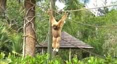 Explore the Naples Zoo and Caribbean Gardens Naples zoo Naples Zoo, Naples Florida, Busch Gardens Tampa Bay, Florida Travel Guide, Romantic Escapes, Pensacola Beach, Slow Travel, Summer Travel, Caribbean