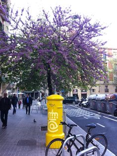 Primavera a l'Eixample de Barcelona.