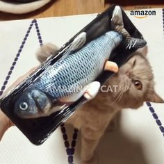 Cute Funny Animals, Cute Baby Animals, Animals And Pets, Cute Cats, Interactive Cat Toys, Fish Cat Toy, Fish For Cats, Cute Animal Videos, Pet Shop