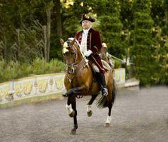 Helxir | FAR, Lusitano Horse, Cavalo Lusitano, Portugal