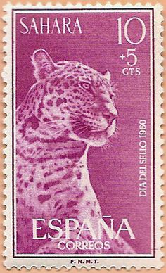Sello Sáhara Occidental, Día del Sello 1960 - Portal Fuenterrebollo Sand Cat, Clouded Leopard, Cat Species, Ghibli, Vintage Stamps, Here Kitty Kitty, Domestic Cat, Stamp Collecting, Big Cats