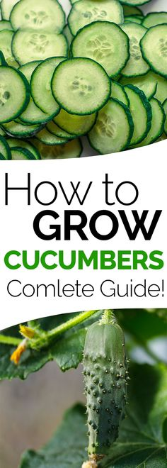 Indoor Vegetable Gardening Everything you need to know about how to grow cucumber plants and get delicious cucumbers from your organic garden at home. Growing cucumbers can be easy. Indoor Vegetable Gardening, Organic Gardening Tips, Container Gardening, Gardening Hacks, Garden Plants, Gardening Vegetables, Garden Compost, Gardening Zones, Plants Indoor
