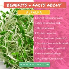Filtur health, vitamin and supplement image section Lower Cholesterol, Seaweed Salad, Metabolism, Sprouts, Benefit, Vitamins, Medical, Herbs, Eat