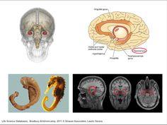 L'ippocampo, il nostro navigatore personale nel cervello / The neuroscience of memory
