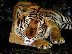Probier´s mal mit Gemütlichkeit...... Image, Reflex Camera, Animales