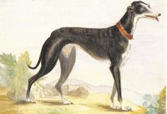 Dog painting from the Brittish Royal Collection - sent to the USA.
