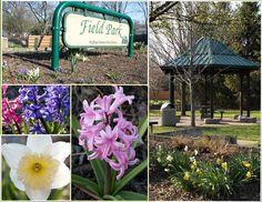 Springtime at Field Park